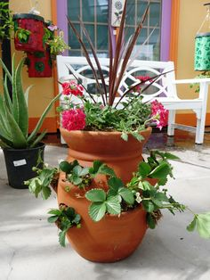 Grow and harvest your own crop of strawberries in a pot on your balcony or patio. Easy!