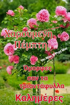 Good Day, Good Morning, Beautiful Pink Roses, Greek Quotes, Thursday, Buen Dia, Buen Dia, Hapy Day, Bonjour
