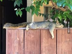 It's a hot day to be a squirrel in LA
