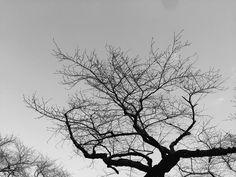 photo by Tsutomu Komine
