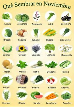 Exceptional Home vegetable garden tips are offered on our internet site. look at this and you wont be sorry you did.