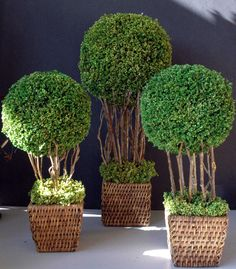 10 Spectacular Topiary Designs | TM-10 Topiaries