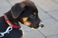 cute_puppy2