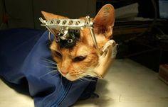 """""""O Grito do Bicho"""": Sobre o fim dos testes em animais e o envolvimento..."""