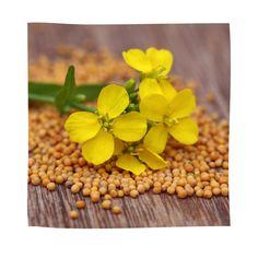 Handmade Panchgavya Ubtan or body scrub ( Kanti Lepana ) Korn, Sustainable Environment, Body Cleanser, Mustard Seed, Kraut, Body Scrub, Traveling By Yourself, Seeds, Canning