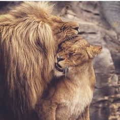 You are my protector.