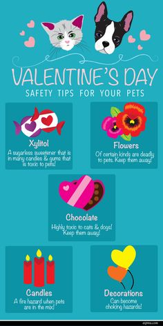 Valentine's Day Safety Tips for your Pets!