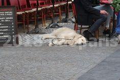【PARIS】【街角のワンコCHIEN】【ワンコの集い場Espace canin】 : フランス落書き帳 Dogs, Animals, Dog, Animaux, Doggies, Animales, Animal, Pet Dogs, Dieren