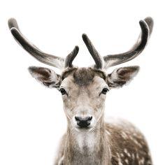 intense close-up of wild animals... antelope?? i think. :)