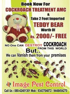 Our cockroach control treatment special offer