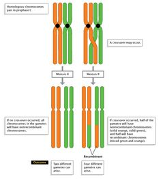 Genetic Recombination and Gene Mapping | Learn Science at Scitable