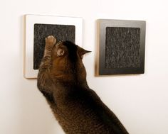 Wall cat scratching post idea