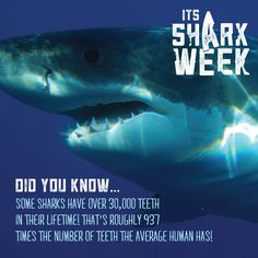 THERE'S NO one more famous for their teeth than sharks! The average shark has teeth and can have up to seven rows of replacement teeth. Because sharks lose a lot of teeth and grow them back quickly, they often go through more than teeth in a lifetime. Dental Fun Facts, Smile Care, Dental Check Up, Implant Dentist, Affordable Dental, Kids Dentist, Dental Procedures, Dental Bridge, Dental Humor