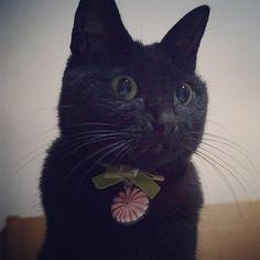 いいね!194件、コメント24件 ― クロチアちゃんさん(@kurochiachiyan)のInstagramアカウント: 「なんとなくキョトンと #黒猫 #猫 #cat #blackcat」