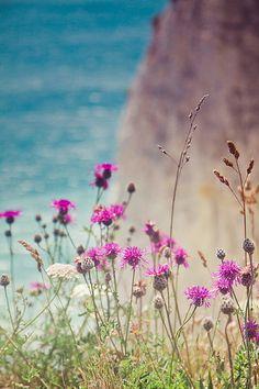 Summer flowers ☀