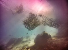 School of fish under Mataking jetty