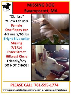 **Marblehead, MA 8-28-14 2 sightings of a dog fitting Clarissa's description in the area of Pickwick Rd./Humphrey and Atlantic. Please continue to share!