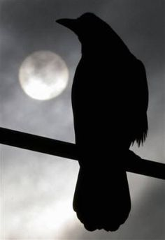 Raven or crow in the moonlight - silhouette Quoth The Raven, Photo Animaliere, Raven Art, Jackdaw, Crows Ravens, Silhouette, Stars And Moon, Beautiful Birds, Dark Art
