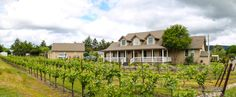 What's life like on a 1-acre vineyard? Henry Matthes shows me around his #Sonoma home!
