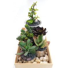 Succulent container garden on a budget. Recycled tin cans, timber, stones and plants.