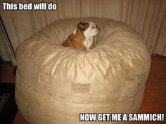 funny bulldog memes | Spoiled dog