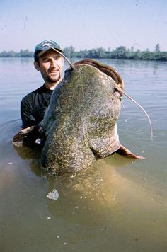Giant Catfish - Pixdaus