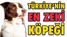 Türkiye'nin En Zeki Köpeği Max - Şampiyon Köpek OHA Diyorum'da Ohana