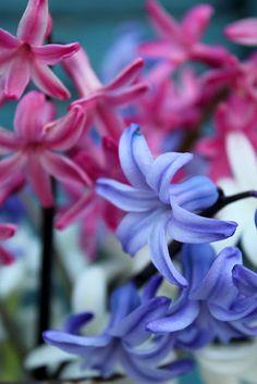 how pretty ... wonder what kind of flowers these are우리카지노 SK8000.COM 우리카지노 우리카지노우리카지노 우리카지노