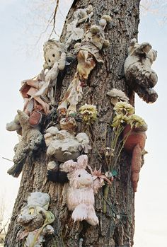 Tree of lost toys found near an abandoned Aztec motel in Albuquerque New Mexico