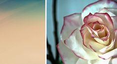 DIY: flores feitas de filtros de café
