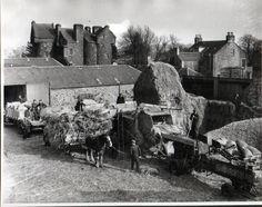 Claypotts Place farm 1950's