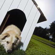 How to Build a Winterized Dog House for Cold Weather | eHow