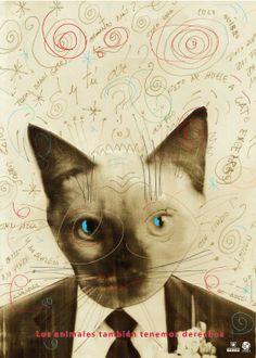Juan Carlos Darias, Los Animales tambien tenemos derechos State, Kitty, Poster, Faces, Inspiration, Collection, Animales, Colors, Venezuela