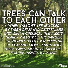 #Hemp not #Trees