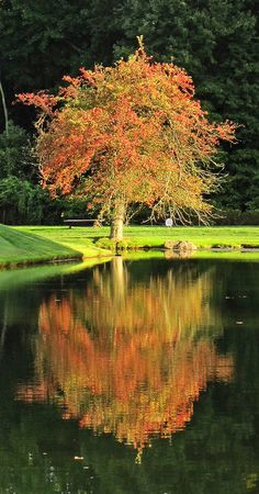 #reflection at golf course