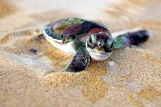 Awww super cute sea turtle :3 i dont know what species it is i am more of a tortoise person XD