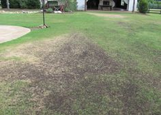 All about top dressing your lawn with compost; compost is the best organic lawn care (best organic fertilizer); compost IS organic fertilizer for sod
