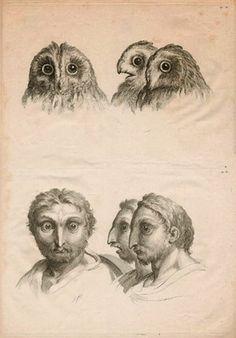 Brain Magazine - Page Pute - Au 17ème, le peintre Charles Le Brun avait dessiné Sarah Jessica Parker dans ses recherches sur la physiognomon...