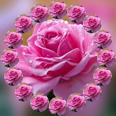 Good Morning Flowers Rose For Him - Good Morning Flowers Rose Beautiful Flowers Wallpapers, Beautiful Rose Flowers, My Flower, Pretty Flowers, Pink Flowers, Roses Gif, Flowers Gif, Bouquet Flowers, Flowers Nature