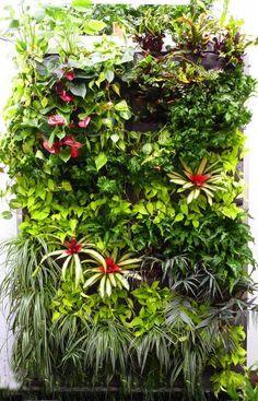 plantas en cascada