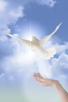 Doves aren't just symbols of love but of peace and serenity and Jesus!!!!