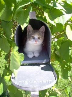 <b>The joke's on these cats, though.</b> Going through someone else's mail is a federal crime.
