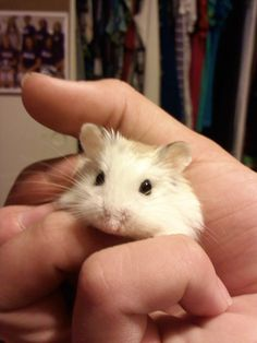 little hampster :)