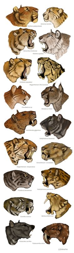 Prähistorisches Oh theyre ugly towards the end Prehistory Prähistorisches Prehistory illustration theyre ugly Fantasy Creatures, Mythical Creatures, Animal Anatomy, Cat Anatomy, Extinct Animals, Prehistoric Creatures, Cat Drawing, Drawing Ideas, Creature Design
