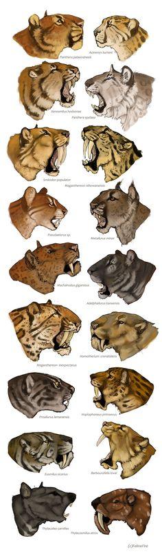 Variasjoner på temaet av løve-dyr