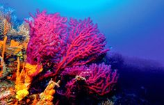 Arkeoloji Dia: Doğal Alanlar ve Milli Parklar-Balıkesir / Ayvalık Adaları Tabiat Parkı ( Ayvalık Islands Nature Park )