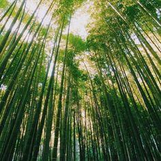 『若竹色と木漏れ日』  足を踏み入れた瞬間に 涼しい光風が身体を包む  photo by: @koppe999  #鎌倉#報国寺 #写真好きな人と繋がりたい #東京カメラ部#photo_shorttrip#photravelers#japan_daytime_view #ig_photooftheday#instagramjapan#IGersJP#team_jp_#loves_nippon#lovers_nippon#icu_japan#ptk_japan#jp_gallery_member#bestjapanpics#as_member#screen_archive#ray_moment#kf_gallery_vip#bestphoto_japan#retrip_news#グルグル写真部#team_jp_夏色2017#lovers_nippon_2017summer #ig_photosentez#igworld_global#exploringtheglobebucketlist