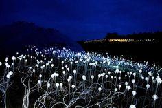 Bruce Munro - Field of Light, Holburne Museum
