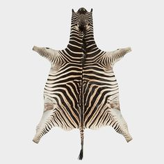 Maiden Africa Shop stock a wide range of genuine quality Burchell's (Equus burchelli) Zebra skin in South Africa at competitive prices. Safari Living Rooms, Zebra Skin Rug, Leather Repair, Leather Craft Tools, Couch Furniture, Leather Books, Zebras, Floor Rugs, African Art
