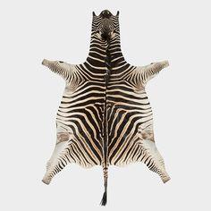 Burchell's Zebra | African Gameskin Group (Pty)Ltd
